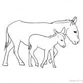 Tiere-Bauernhof-Esel-Ausmalen