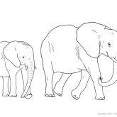 Tiere-Safari-Elefant-Ausmalen