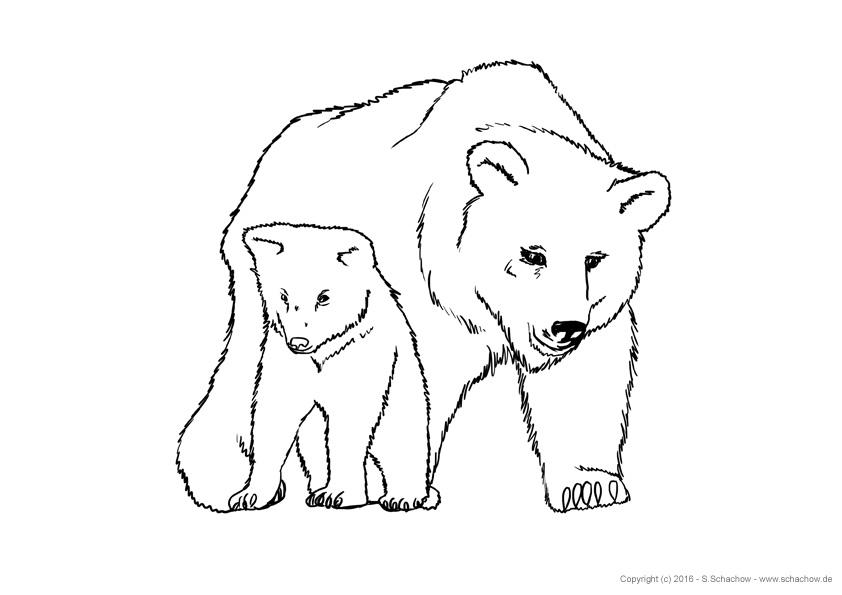 Kostenlose Tierbilder Zum Ausmalen Ausmalbilder Von Tieren Download