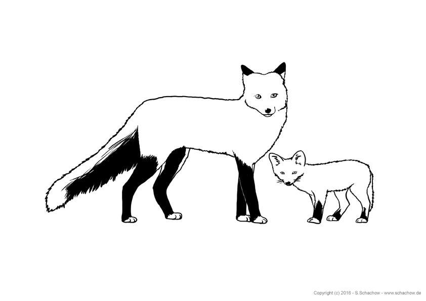 Kostenlose Tierbilder Zum Ausmalen Ausmalbilder Von Tieren