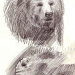 Zeichnung Skizze Bär Leguan
