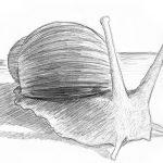 Zeichnung Skizze Schnecke