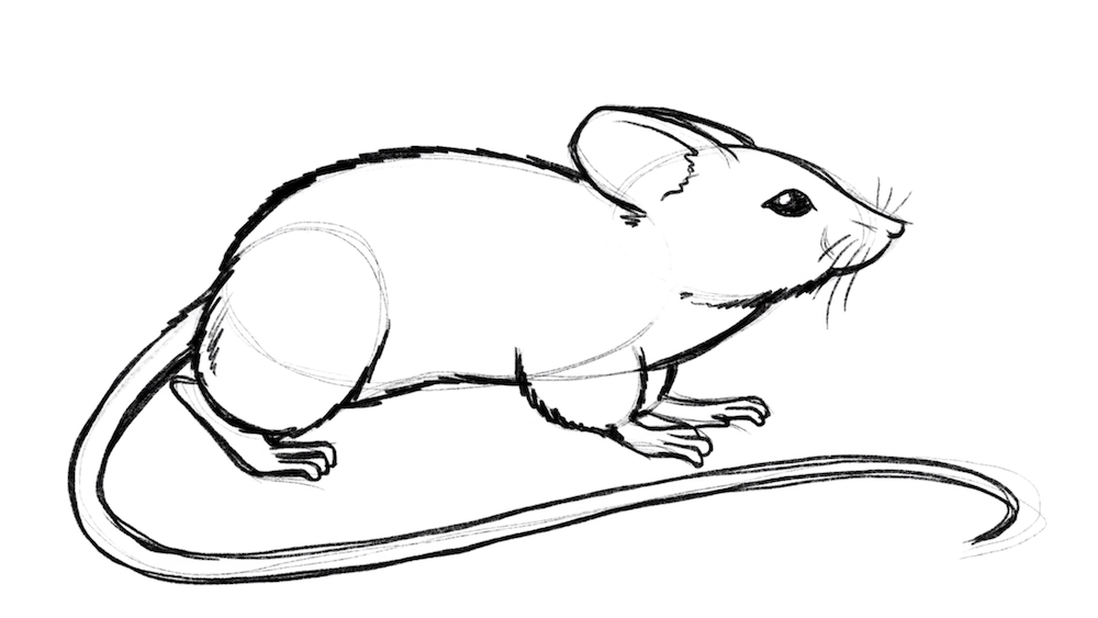 Draw also the tail of the mouse