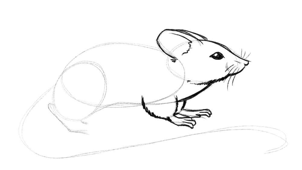 Draw now the front legs in detail