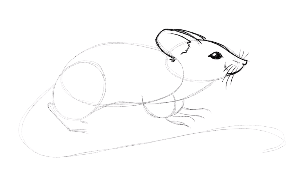 Draw the eyes and muzzle of the mouse