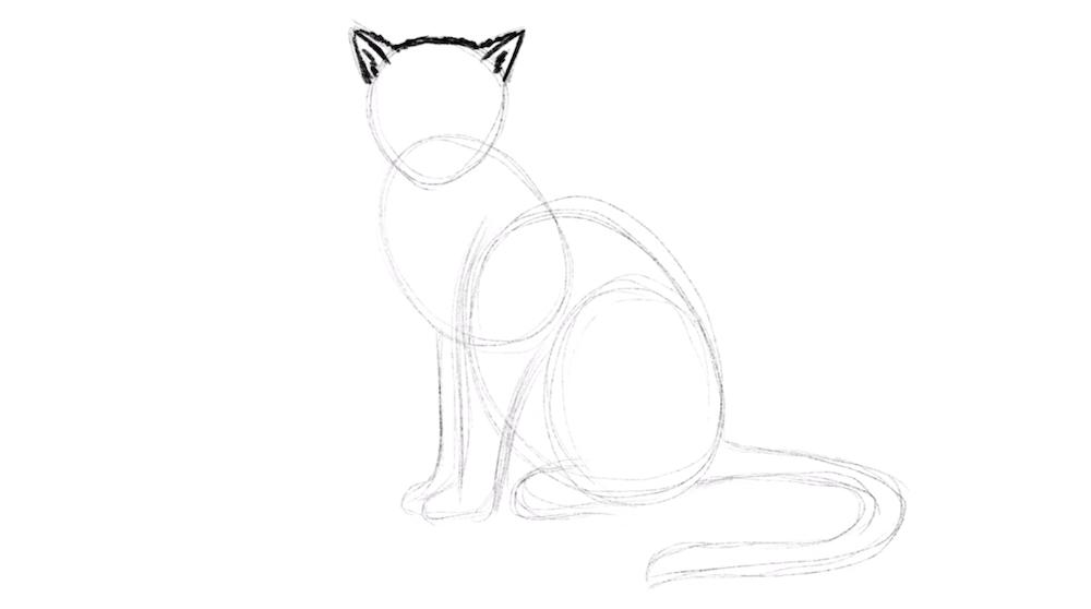 Ohren der Katze zeichnen