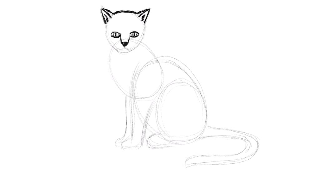 Augen der Katze zeichnen