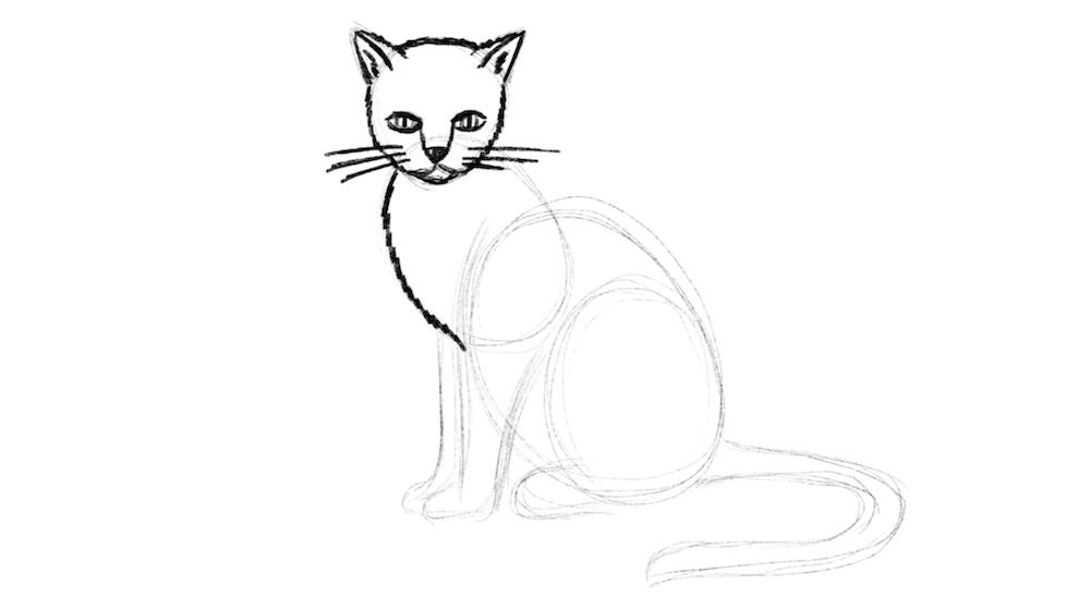Zeichne die Brust der Katze ein