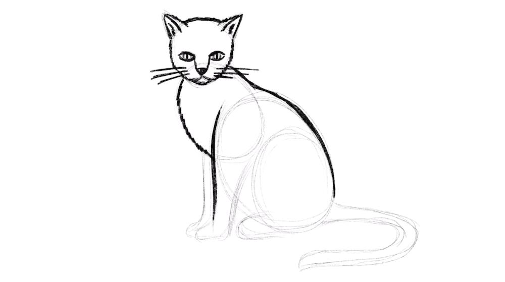 Rücken der Katze