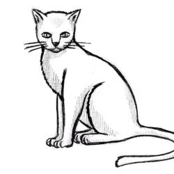 Katze Zeichnen - Zeichnung
