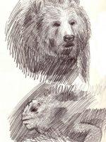 Bleistiftzeichnung Skizze einfach Bär