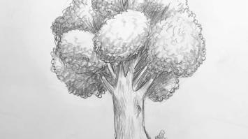 Zeichnen lernen Online Kurs für Anfänger Übung