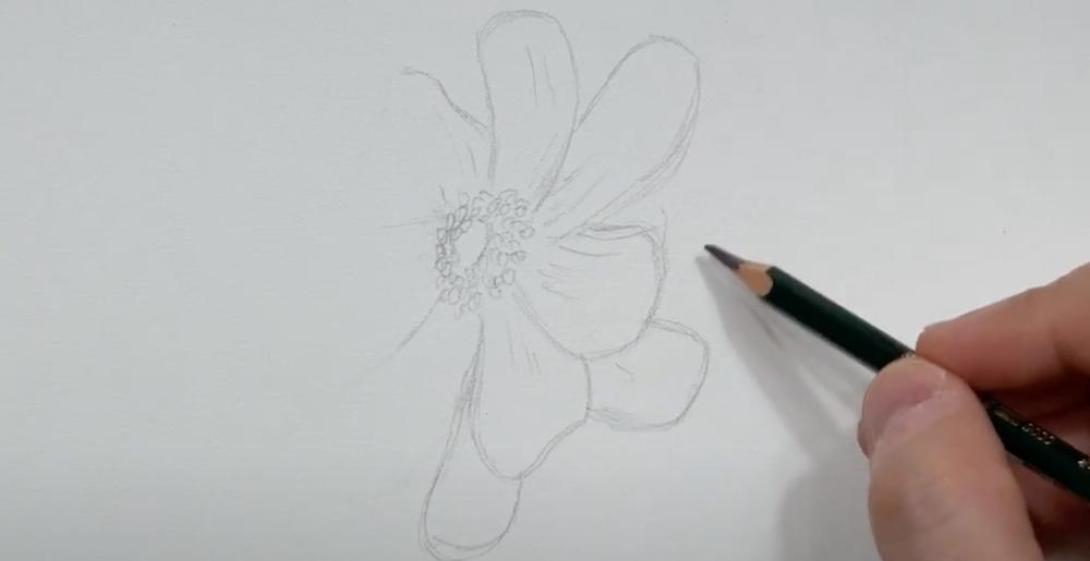 Skizze von der Blume erstellen