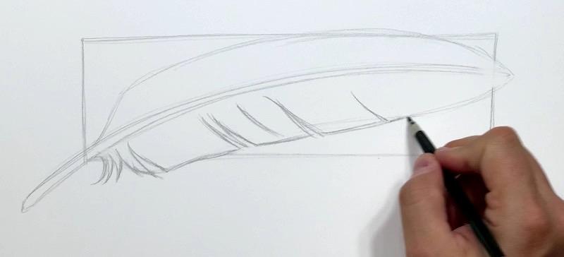 Feder Konturen zeichnen