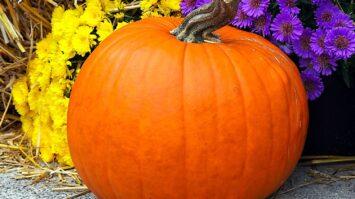 Herbst Kürbis zeichnen