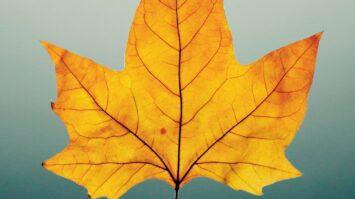 Herbst Motiv Blatt