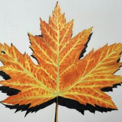 Herbst Blatt zeichnen - Ahornblatt