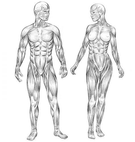 Mensch Muskeln Mann Frau