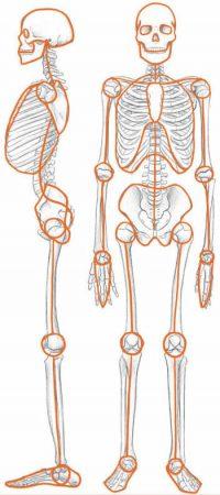 Mensch Skelett zeichnen
