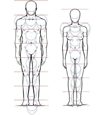 Mensche Proportionen Körper
